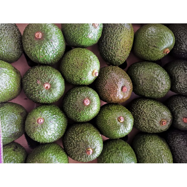AVOCADO(HASS)-22-24PCS/KANYA