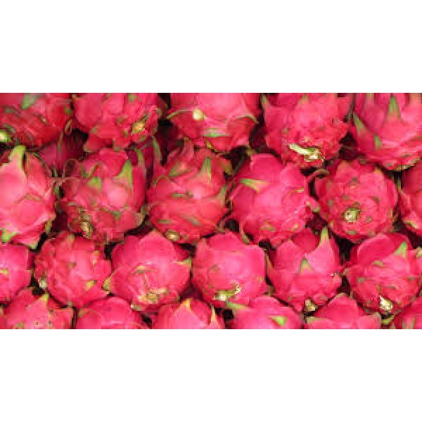 RED DRAGON FRUIT/15PCS/10KGS/MALAYSIA