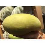 Green Mango-Thailand(L)13-14pcs/10kg