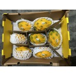 YELLOW DRAGON FRUIT-6/7/8/9 PCS/2.5KG