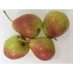 BLUSH PEAR-800GX10/SOUTH AFRICA
