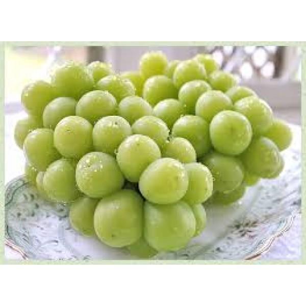 Japanese Shine Muscat Grape-2kg/Japan秀