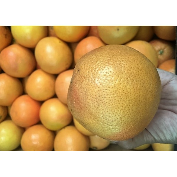 STAR RUBY RED GRAPEFRUIT-SOUTH AFRICA/50PCS