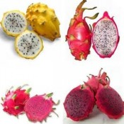 DRAGON FRUIT (2)